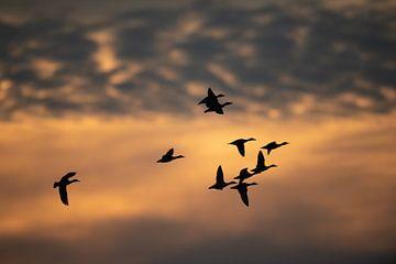 Vue à vol d'oiseau sur Wim de Meester