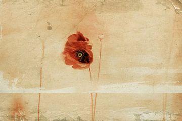 Fragment, Desislava Ignatova von 1x