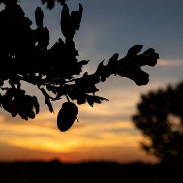 Herfstige zonsondergang van André Dorst