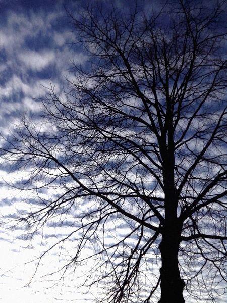Boom in de wolken van Kuba Bartyński