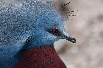 Pigeon voyageur : Ouwehands Dierenpark sur Loek Lobel