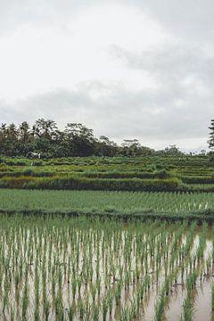 Rijstterrassen in de regen van Mickéle Godderis