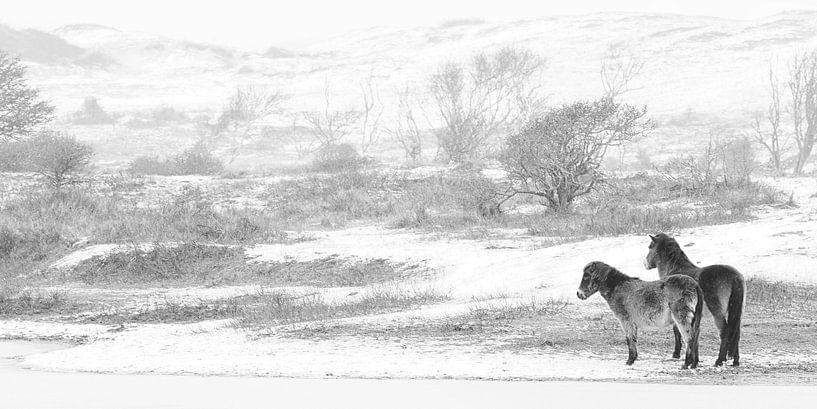WIld horses in the snow van Bob Bleeker