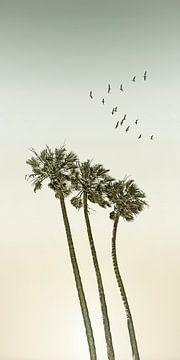 Vintage palmbomen bij zonsondergang | Panorama van Melanie Viola