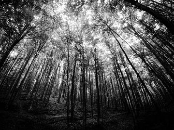 Donker bos van