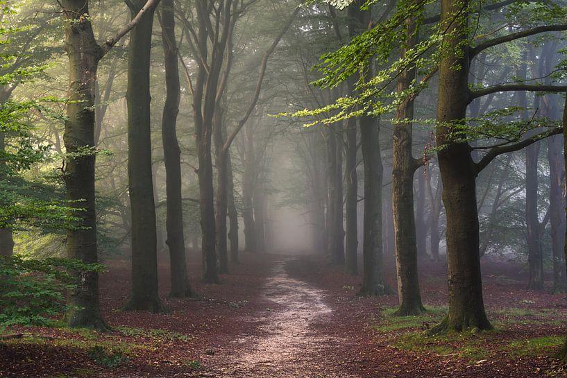 Fairytale Forest van Arnoud van de Weerd