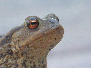 Een kikker die op bezoek komt in het beeld van Wilbert Van Veldhuizen