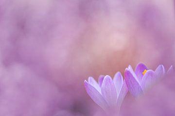 Purple rain, Lila regen von Lia Hulsbeek Brinkman