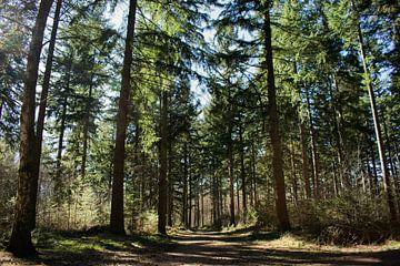 Wandelen door het bos van Jisca Kuijpers