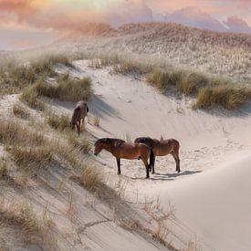 Paarden in de duinen van zippora wiese
