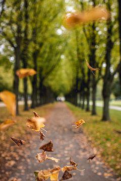 Droomachtige laan met vallende, kleurrijke bladeren in de herfst van Fabian Bracht