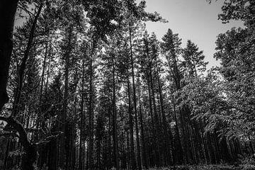 Bomen (Nederland) Drenthe von Tieme Snijders