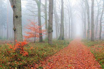 Mistige wandeling in de herfst door het bos van