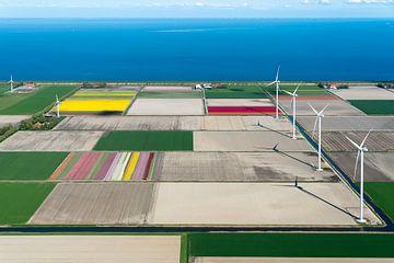 Tulpen en windmolens in polder West-Friesland, met uitzicht op IJsselmeer van Planeblogger