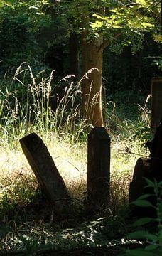 Zentralfriedhof 2 van Ilona Picha-Höberth