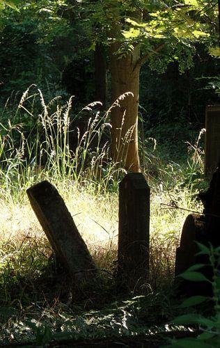 Zentralfriedhof 2 von