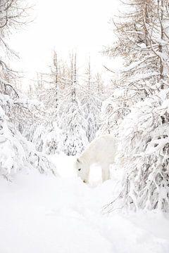 IJslands paard in de sneeuw van Elisa Hanssen