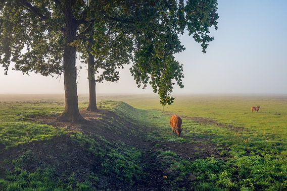 Ochtendnevel in een Nederlands natuurgebied