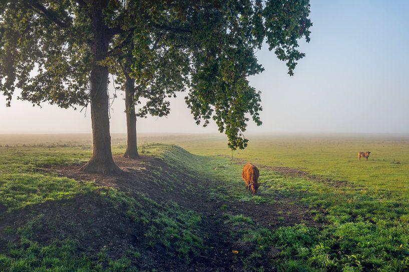 Ochtendnevel in een Nederlands natuurgebied van Ruud Morijn