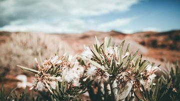 close up van een woestijnplant sur Jonathan van Rijn