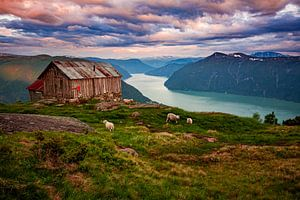 Fjord met schapen in Noorwegen van Ruud Jansen