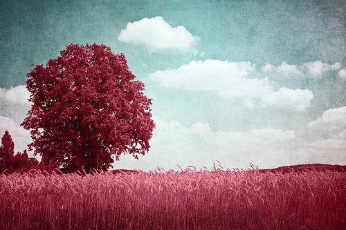Baum in Rot von INA FineArt