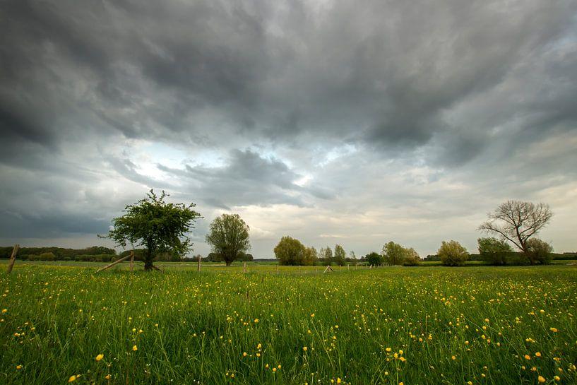 Regenbui van Jan Koppelaar
