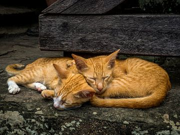 Slapende katten van Mathias Möller