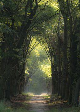 Avenue de la Foreste ins Licht gestellt von Michel Knikker