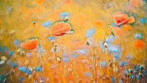 Klaprozen in een veld met korenbloemen
