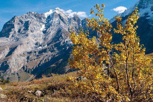 Herfts in de Alpen van
