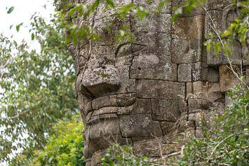 Jungle tempel Ta Prohm, Angkor Wat van