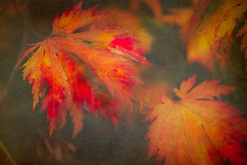 Esdoornbladeren in herfstzon van Annette Hanl