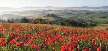 Klaprozen in Toscane van Bart Ceuppens