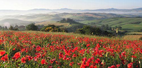 Tuscan Poppies von