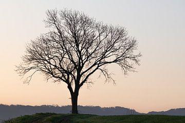 Einsamer Baum von Nicola Mathu