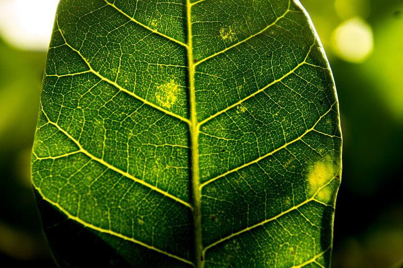 Fotosynthese van Mirella Klas