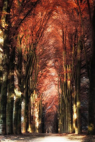 Red Autumn van Rigo Meens