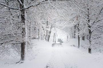 Een winters tafereel. Dwingelderveld, Drenthe. von Ton Drijfhamer