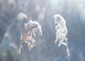nach Schnee Nebel von Barend Koper