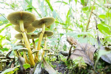 Paddenstoel in het bos von Tess Smethurst-Oostvogel