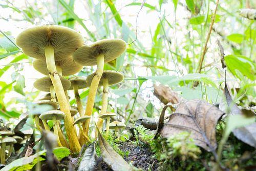 Paddenstoel in het bos