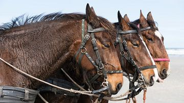 Pferdeköpfe von Greetje van Son