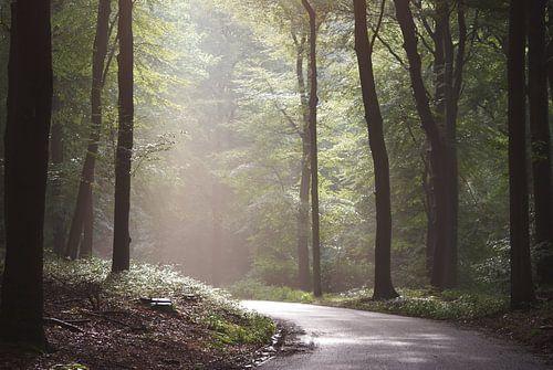 Zonnetje tussen de bomen in het bos von Diana Waardijk
