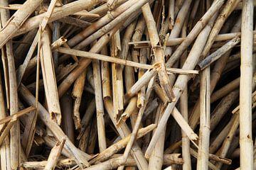 Bamboe van Larka Louwe