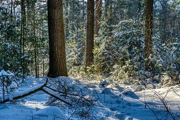 Lichtspel in de sneeuw van Joran Quinten