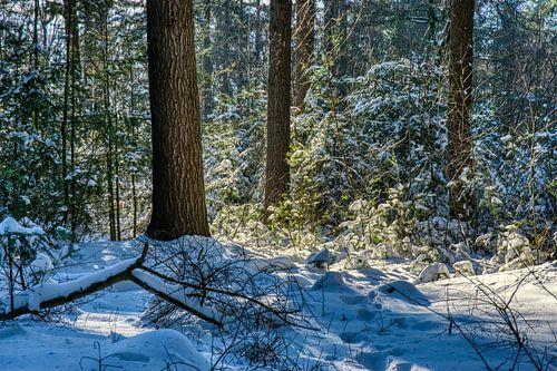 Lichtspel in de sneeuw