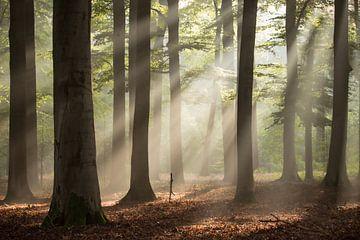Dromerig Bos van Rob Willemsen