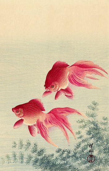 Twee sluierstaart goudvissen, Ohara Koson