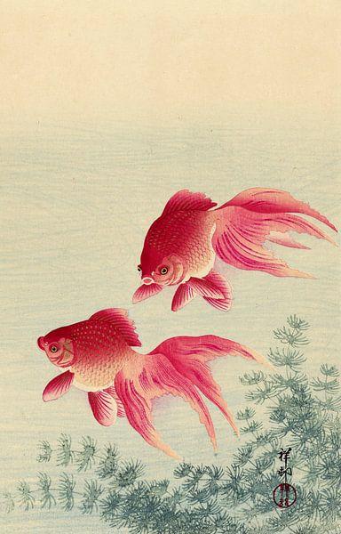Twee sluierstaart goudvissen, Ohara Koson van 1000 Schilderijen